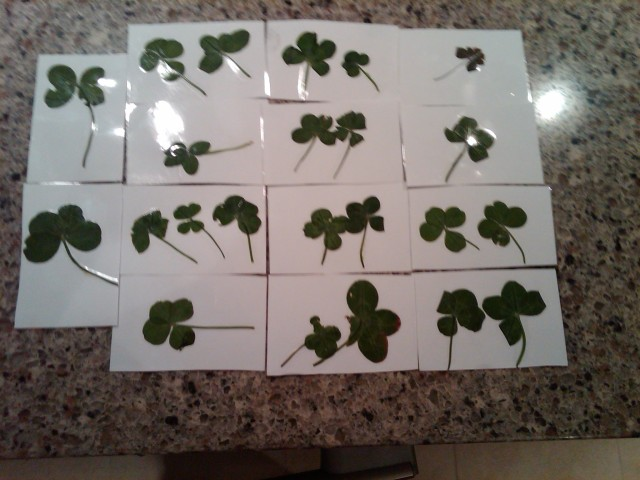 23 four leaf clovers